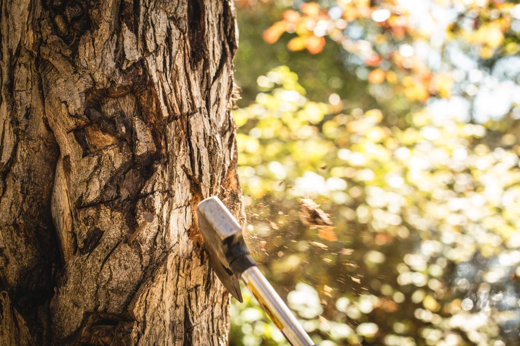 ax-axe-cut-a-tree-12157